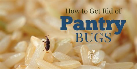 how to get rid of bugs in kitchen cabinets how do you get rid of bugs in kitchen cabinets
