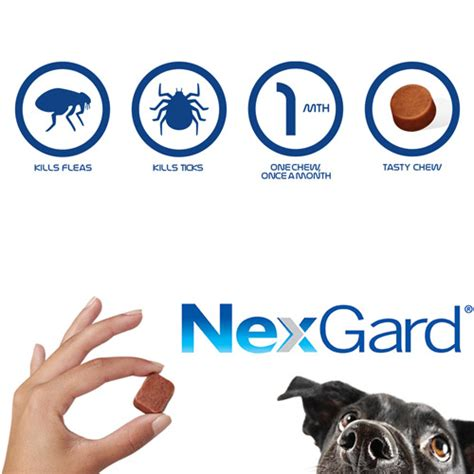what is nexgard for dogs budget pet products