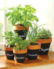 indoor herbal garden indoor herb garden ideas creative juice