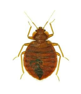 bed bugs in the workplace bed bug prevention in the workplace florida bed bug