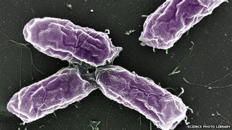 can dogs get salmonella are the health risks of keeping pets increasing news