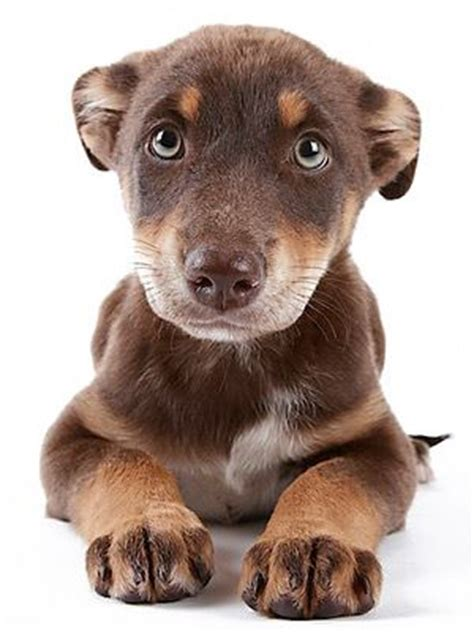 dog accidents in house bad news dogs 10 common canine behavioral issues pet health center everyday health