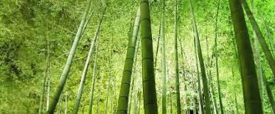 Wallpaper Import Motif Bambu Kecil keket a great site page 3