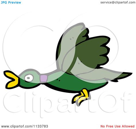 cartoon of a flying mallard duck royalty free vector