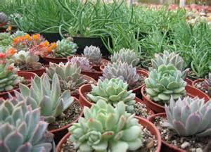 25 best nursery near me plants ideas on pinterest