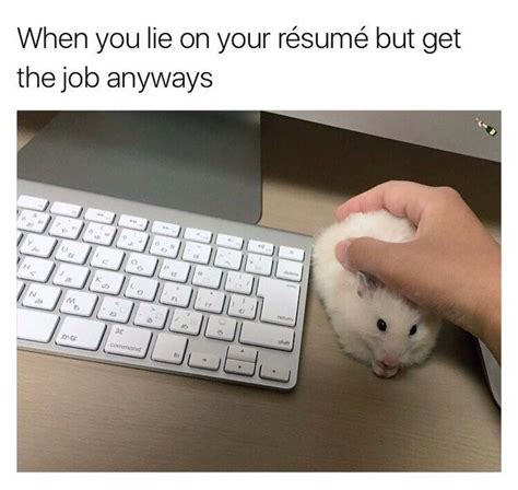 dont lie on your resume whatsapp forwards jokes riddles and puzzles