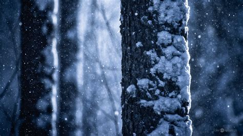 Snow Is Falling falling snow 187 187 joni niemel 228 photography