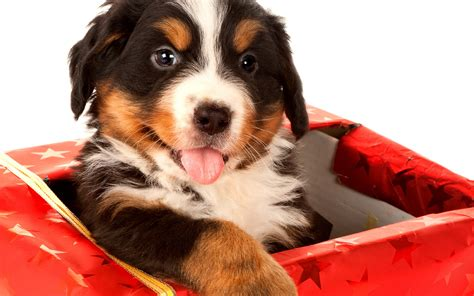 things to buy for a puppy things you must buy for your new puppies
