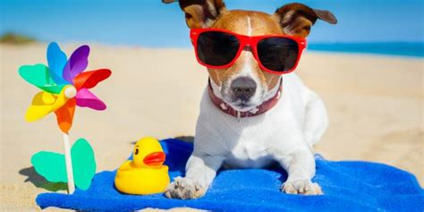 can dogs get sunburn can dogs and cats get sunburn prevention tips