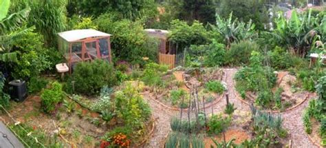 backyard permaculture australia permaculture garden outdoors pinterest gardens