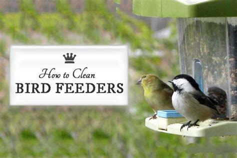 how to clean bird feeders empress of dirt