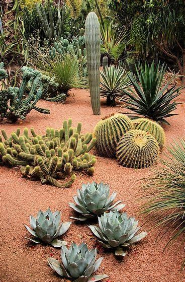 71 best agave images on pinterest succulents agave plant and deer resistant plants