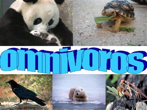 imagenes de animales carniboros carnivoros herbivoros omnivoros related keywords