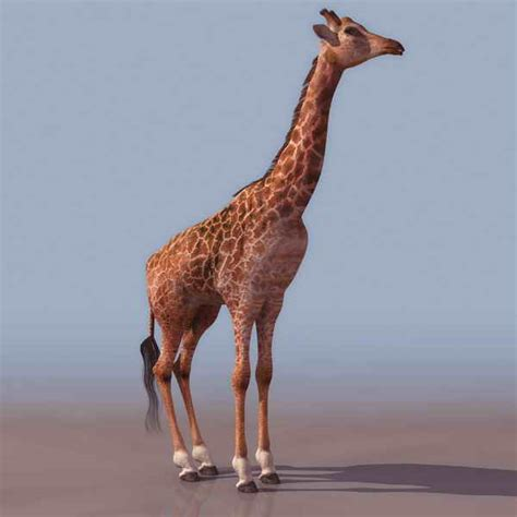 Bathtub Commercial Giraffe Animals 23 3d Model Download Free 3d Models Download