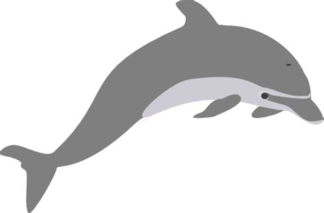 Dolphin Outline Png by Dolphin Clipart Dolphin Clip Dolphin Animals Clipart Downloadclipart Org