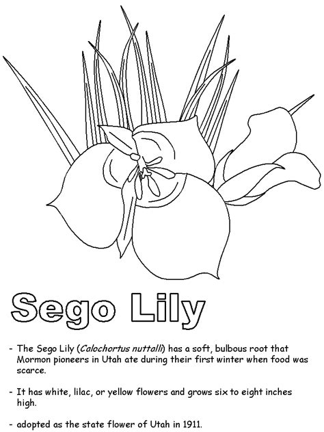 utah coloring book pages sego lily coloring page