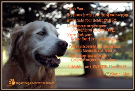 golden retrievals poem this moment see beautiful thank you golden woofs