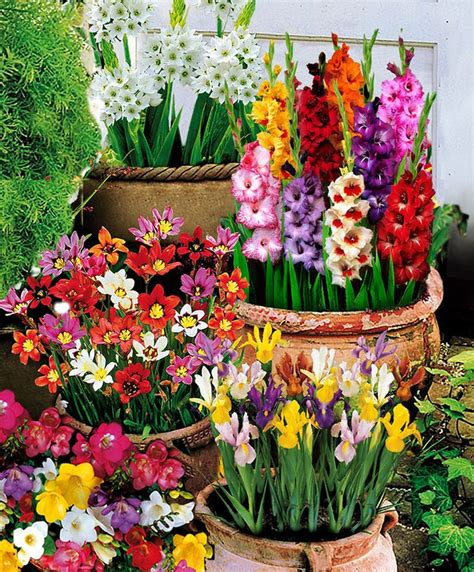 Bulb Garden Ideas Best 25 Bulbs Ideas On Pinterest Planting Bulbs Bulbs And Bulb Flowers