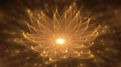 lotus water enlightenment or meditation and universe january 2017 david snape and friends the place to