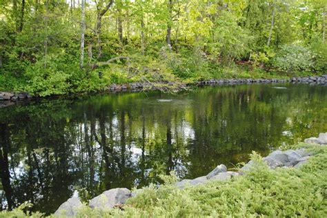 backyard trout pond trout pond traditional landscape minneapolis by