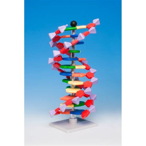 dna kit molymod minidna dna kit 12 base pairs periodic table shop