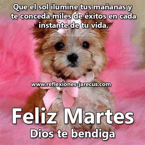 imágenes tiernas de feliz martes imagen de perrito feliz martes dios te bendiga imagenes