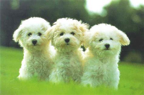 imagenes de animales bonitos perritos chiquitos bonitos related keywords perritos