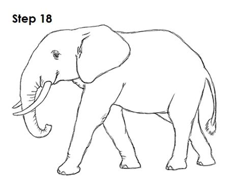 Image Gallery Elephant Drawing