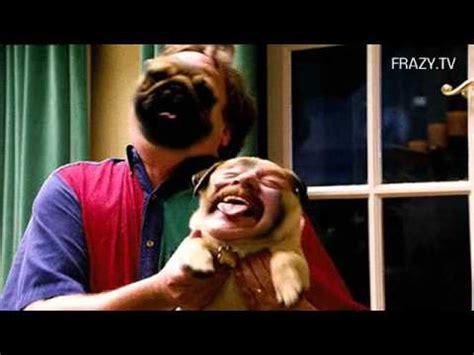 zach galifianakis pug zach galifianakis pug original mashup lol by frazy tv