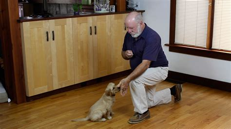 dog whisperer house training dog training dvd paul owens the original dog whisperer