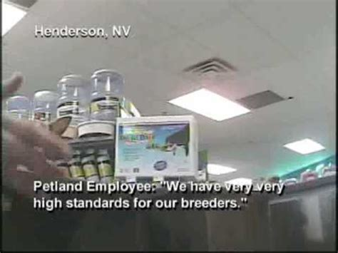 petland puppy mills petland investigation pet store sells puppy mill dogs