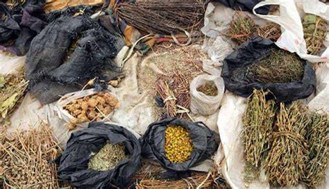 nigerian indigenous herbs back to basics as zimbabwe turns to indigenous medicine