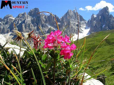 foto di fiori stupendi fiemme la settimana quot fiori erbe e sapori quot predazzoblog