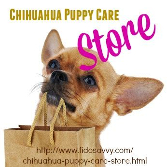 chihuahua puppy care chihuahua puppy care guide