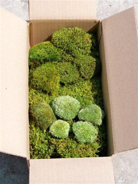 indoor moss garden kit 17 best images about garden terrarium plants on cyperus papyrus maidenhair fern