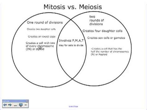 meiosis vs mitosis venn diagram a comparison of mitosis and meiosis