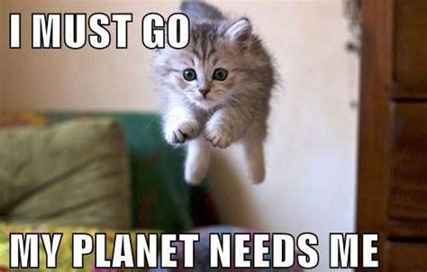 Flying Cat Meme - flying cat funny animals pinterest