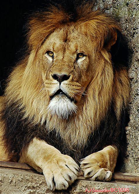 imagenes animales con pelo animales vertebrados mamiferos