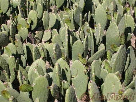 lexico de los terminos culinarios y mexicanismos l 233 xico de los t 233 rminos culinarios y mexicanismos