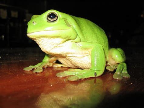tree frog animal wildlife