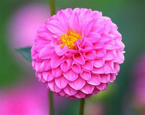 imagenes bellas hermosas y preciosas im 225 genes de flores bonitas que puedes plantar en el jard 237 n
