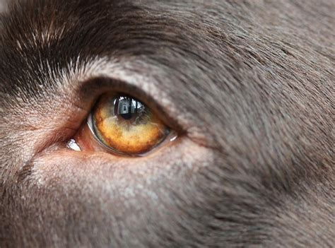 Cara Memakai Eye Liner 122 best images about reflections on escher