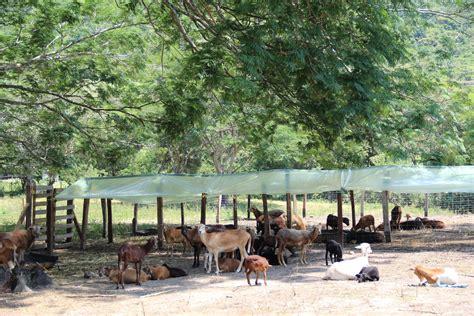 instalaciones para ovinos abc del finkero