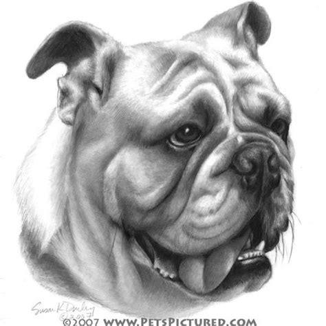 for my awesome bulldogs infinity bulldog drawings bulldog portrait original