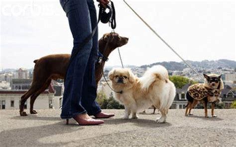 giochi di portare a spasso i cani la passeggiata con il fa bene come la palestra
