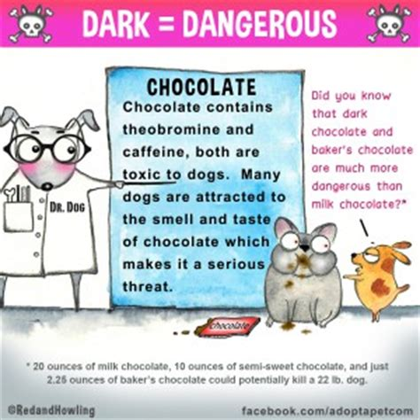 effects of chocolate on dogs what s the big deal about chocolate by dr moreira new jersey