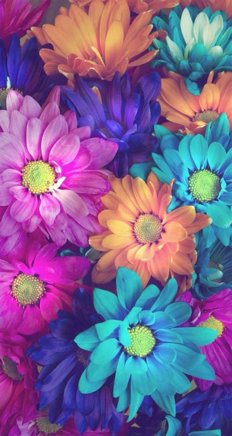 imagenes flores pinterest imagen de flowers beautiful and wallpaper fondos de