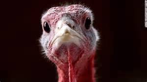 crazy thanksgiving facts 10 fun facts we bet you didn t know about thanksgiving