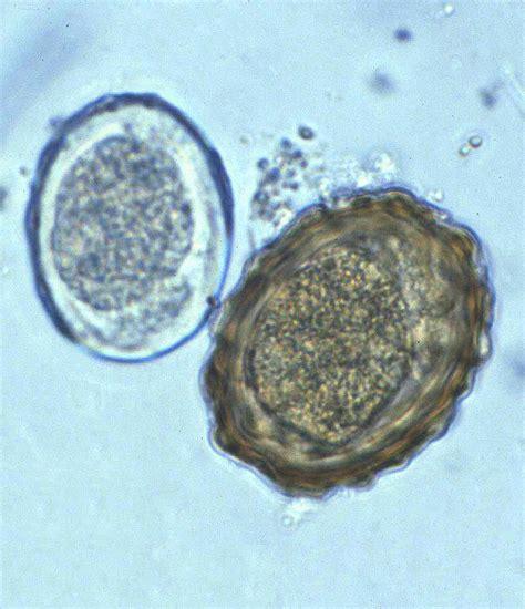 biology 546