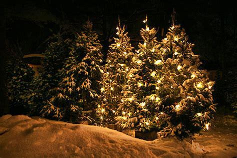 beautiful beauty christmas christmas tree cute image